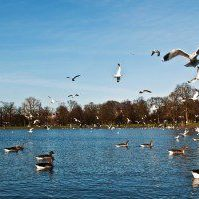 ducks-and-seagulls-in-kensington-gardens